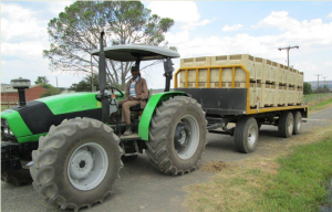 Mbulelo Matutu, one of the drivers employed by the farm proudly transports the citrus grown on the Winterberg Agricultural High School farm to the Riverside Enterprises Packing house for sorting.